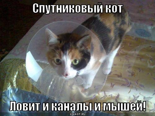 Спутниковый кот