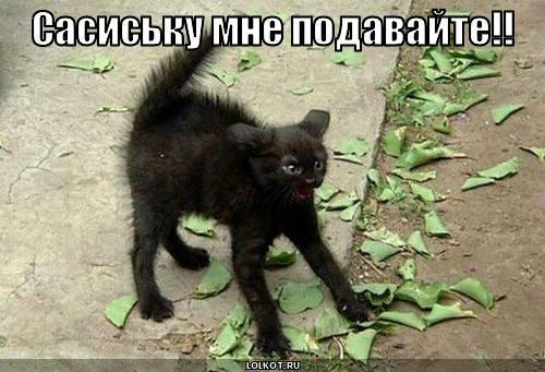 Сасиську мне подавайте!!