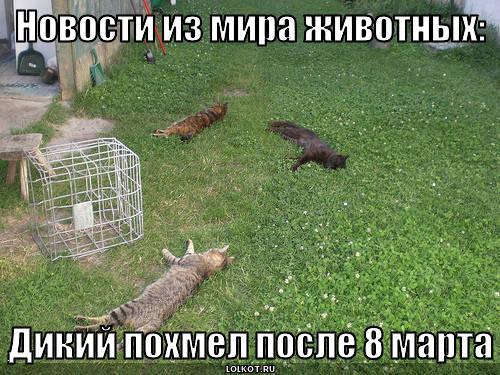 из мира животных