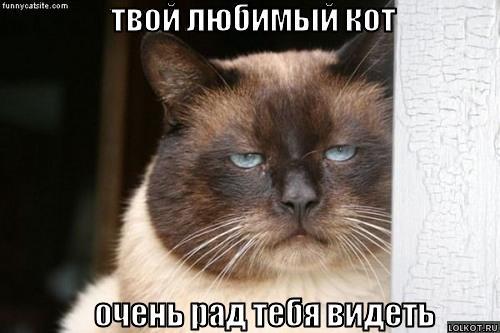 твой любимый кот
