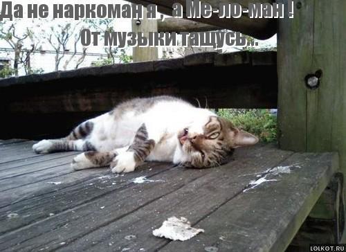 кот меломан