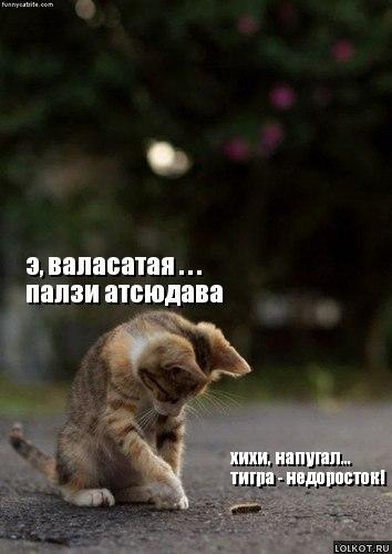 тигра-недоросток