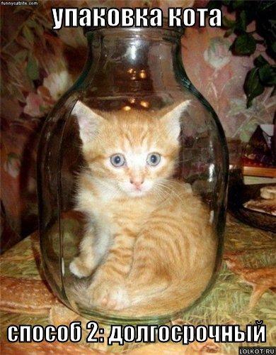 упаковка кота, способ 2
