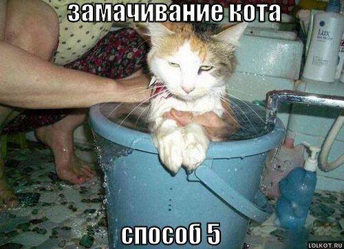 замачивание кота способ 5