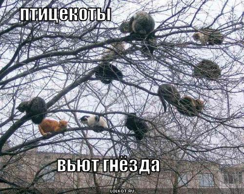 птицекоты