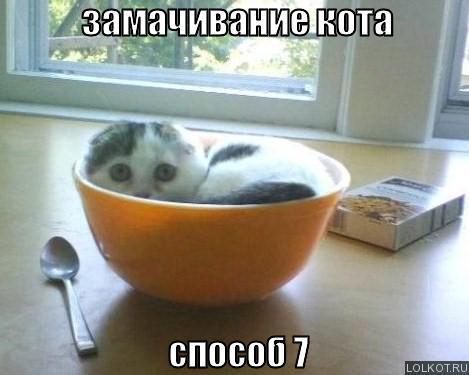 замачивание кота способ 7