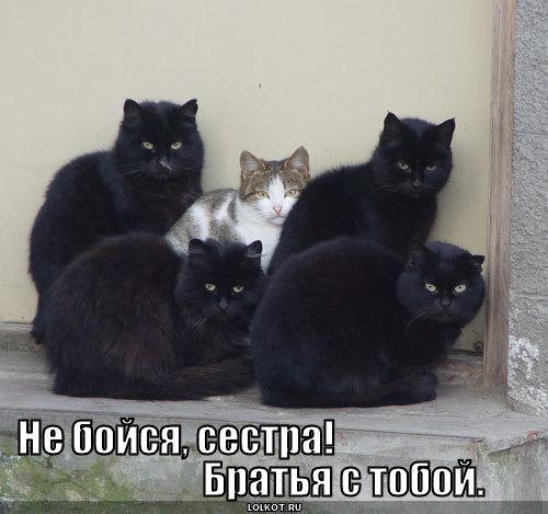 братья с тобой