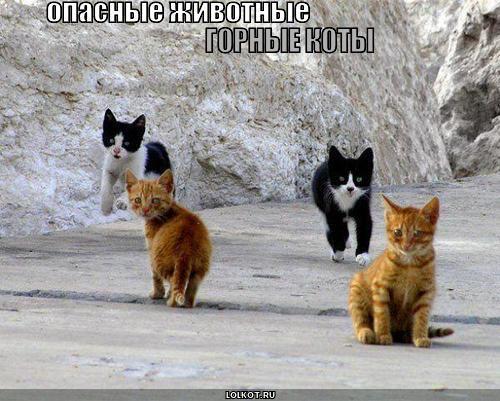 горные коты