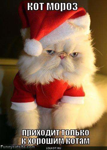 кот мороз