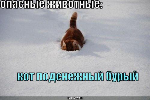кот подснежный бурый