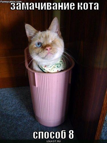 замачивание кота: способ 8