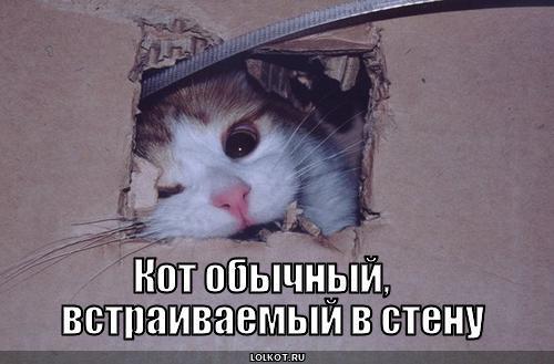 кот обычный