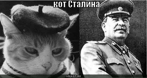 кот Сталина