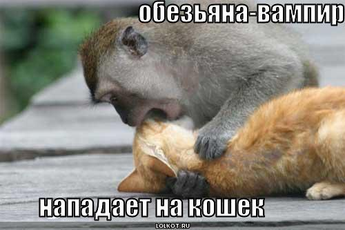 обезьяна-вампир