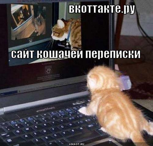 вкоттакте.ру