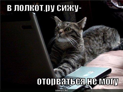 в лолкот.ру сижу