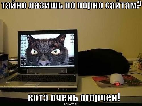 лазишь по сайтам?