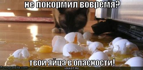 яйца в опасности