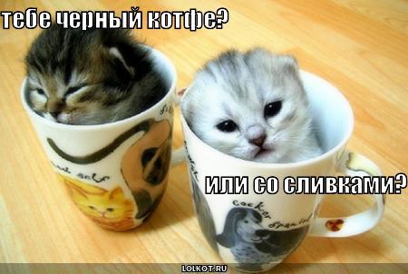 котфе
