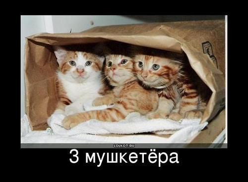 3 мушкетёра