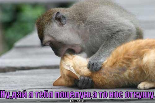 дай поцелую