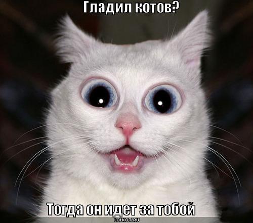 гладил котов?