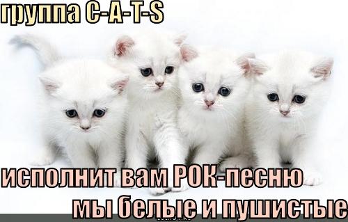 группа c-a-t-s