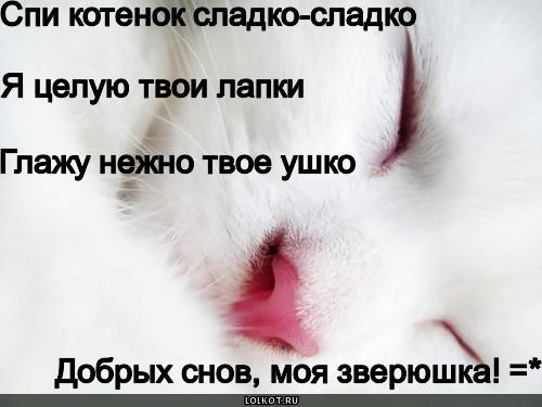 Тебя люблю, картинки ты мой сладкий котик