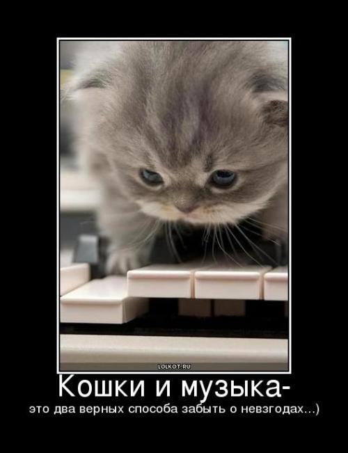кошки и музыка