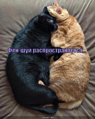 кошки по фен-шую