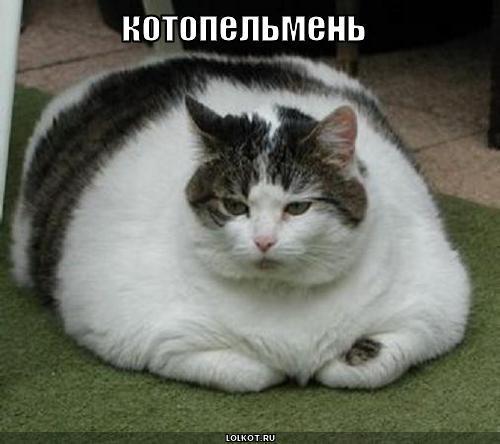 кот или пельмень?