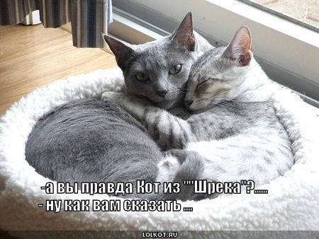 """кот из """"шрека"""""""