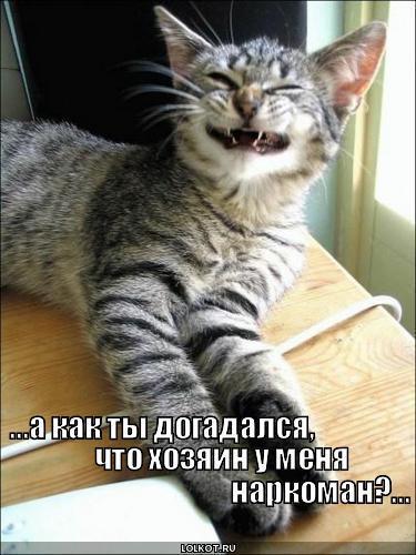 кот своего хозяина