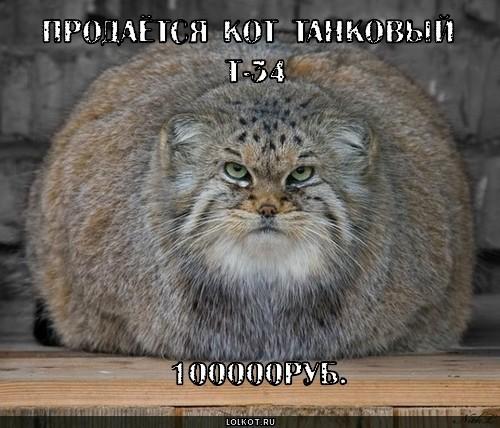 кот танковый
