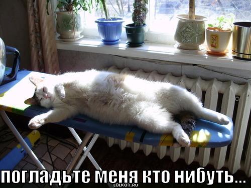 кот требует утюга
