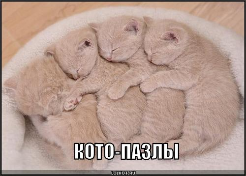 кото-пазлы