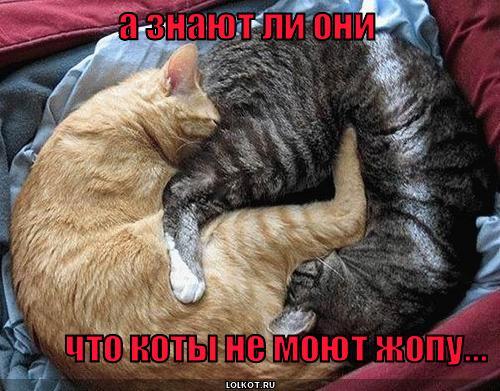 коты не моют там