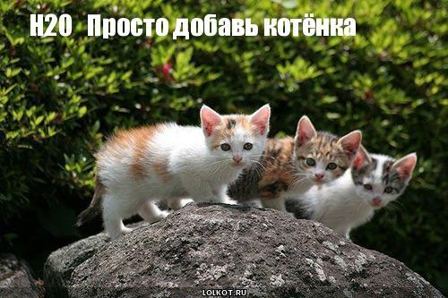 котята быстрого приготовления