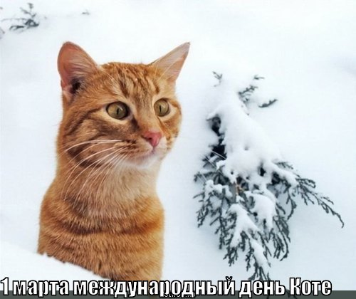 международный день коте