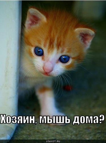 мышь дома?