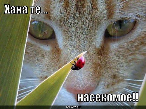 насекомое!