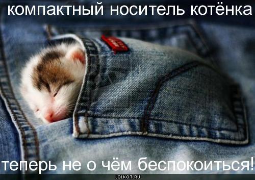 носитель котёнка