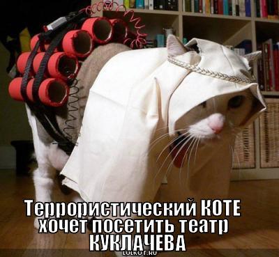 террористический коте