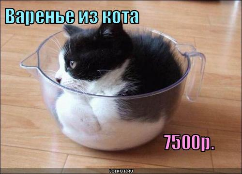 варенье из кота