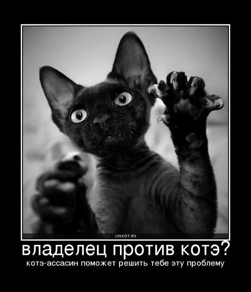 владелец против котэ?
