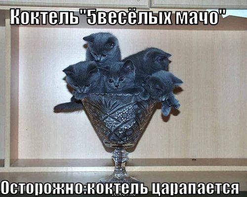 5 весёлых мачо