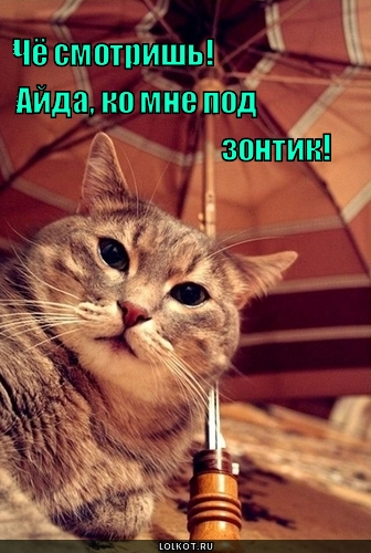 айда под зонтик!