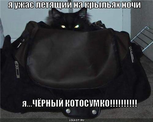 чёрный котосумко