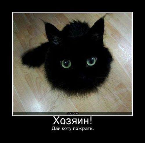 дай коту пожрать