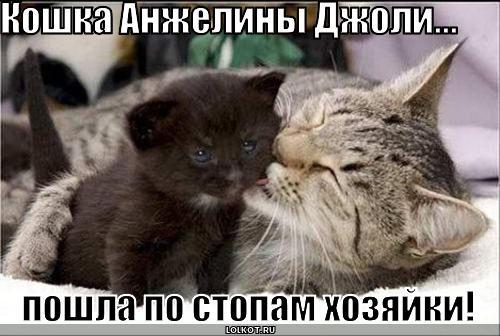 кошка анжелины джоли